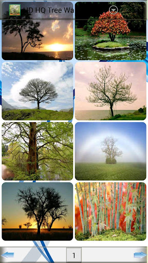 HD HQ Tree Wallpapers