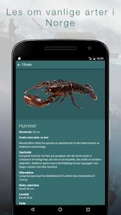 Fritidsfiske Fiskeridirektoratet - náhled