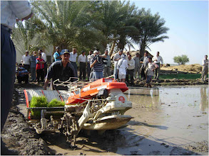 Photo: Farmers watch a mechanized transplanter plant seedlings, 2010 [Photo provided by  Khidir A. Hammed]