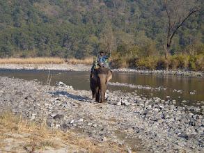 Photo: Gulabo coming to fetch us to cross the famous Ramganga River at Corbett January 2008