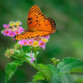 Beauty in Color  by Dory Formiller - Uncategorized All Uncategorized ( organe, butterfly, color, monarch, flowers, black,  )