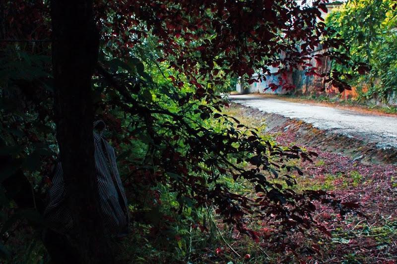 La strada nel bosco  di gretabaruffi