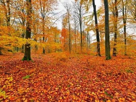 Mooie herfst wandelingen bij de vakantiewoning Diamar te La Roche en Ardennes
