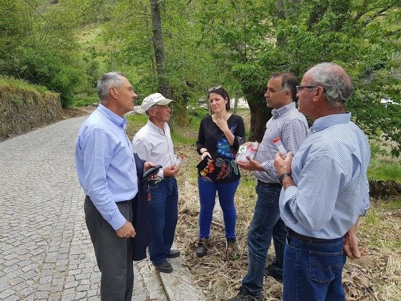 Câmara de Lamego apoia luta contra a vespa das galhas do castanheiro