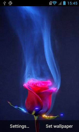 Lovely rose live wallpaper