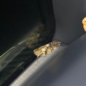 ハイラックス 4WD ピックアップのカスタム事例画像 イチキさんの2020年10月19日12:07の投稿