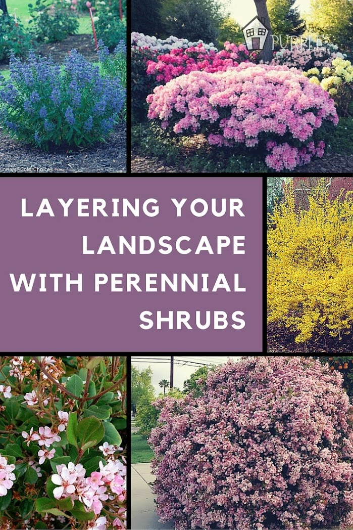 Perennial garden plan perennial shrubs layer 3 pretty for Garden plans and plants