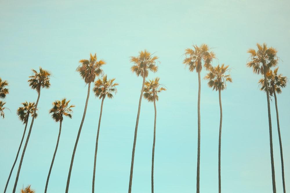 California's AB5 Law