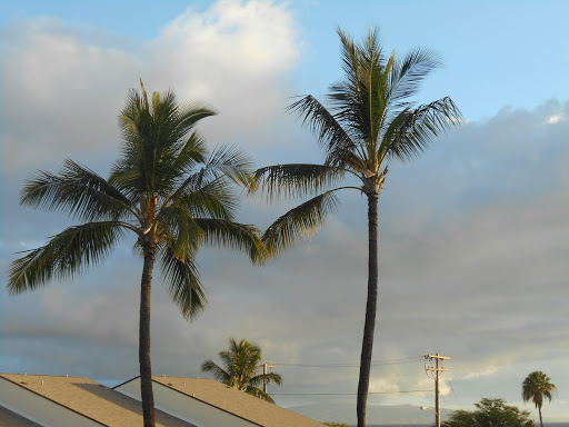 DSCN0125.JPG - Swaying Palms outside our Kihei condo