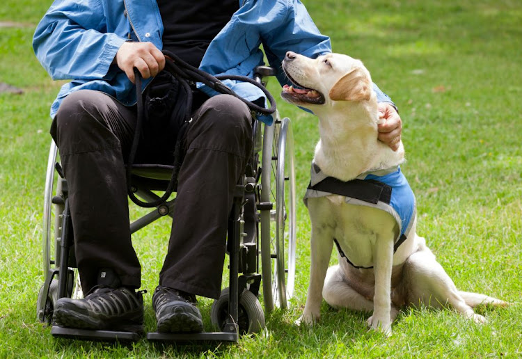 International Assistance Dog Week recognises the life-changing services performed by guide dogs.