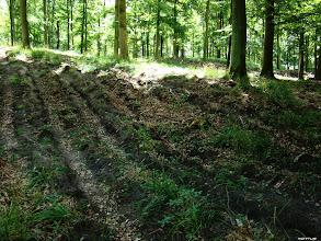 Photo: Ślady działalności leśników