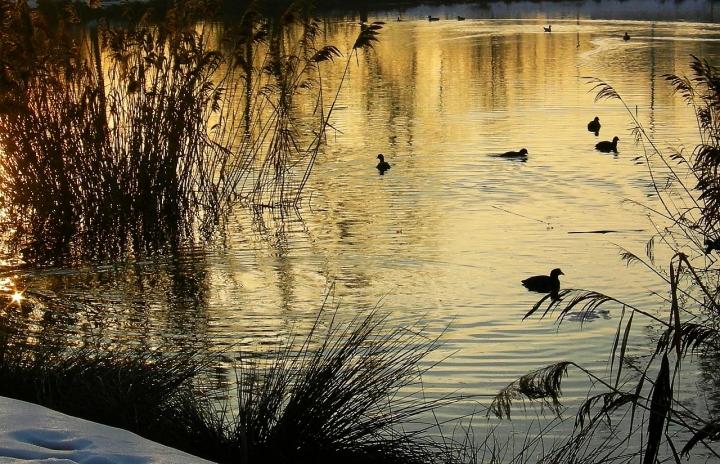 Sul lago dorato. di Paolo Zanoni