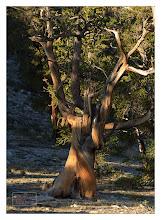 Photo: Eastern Sierras-20120715-248