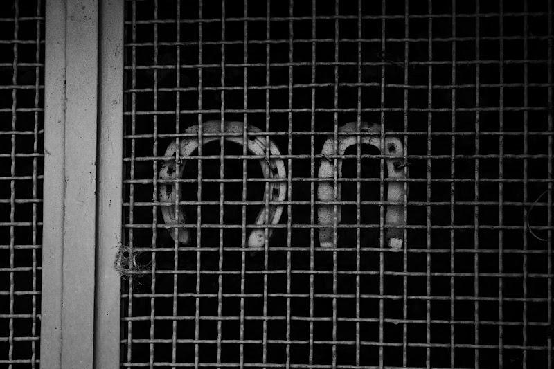 Fortuna in gabbia di Frenkye