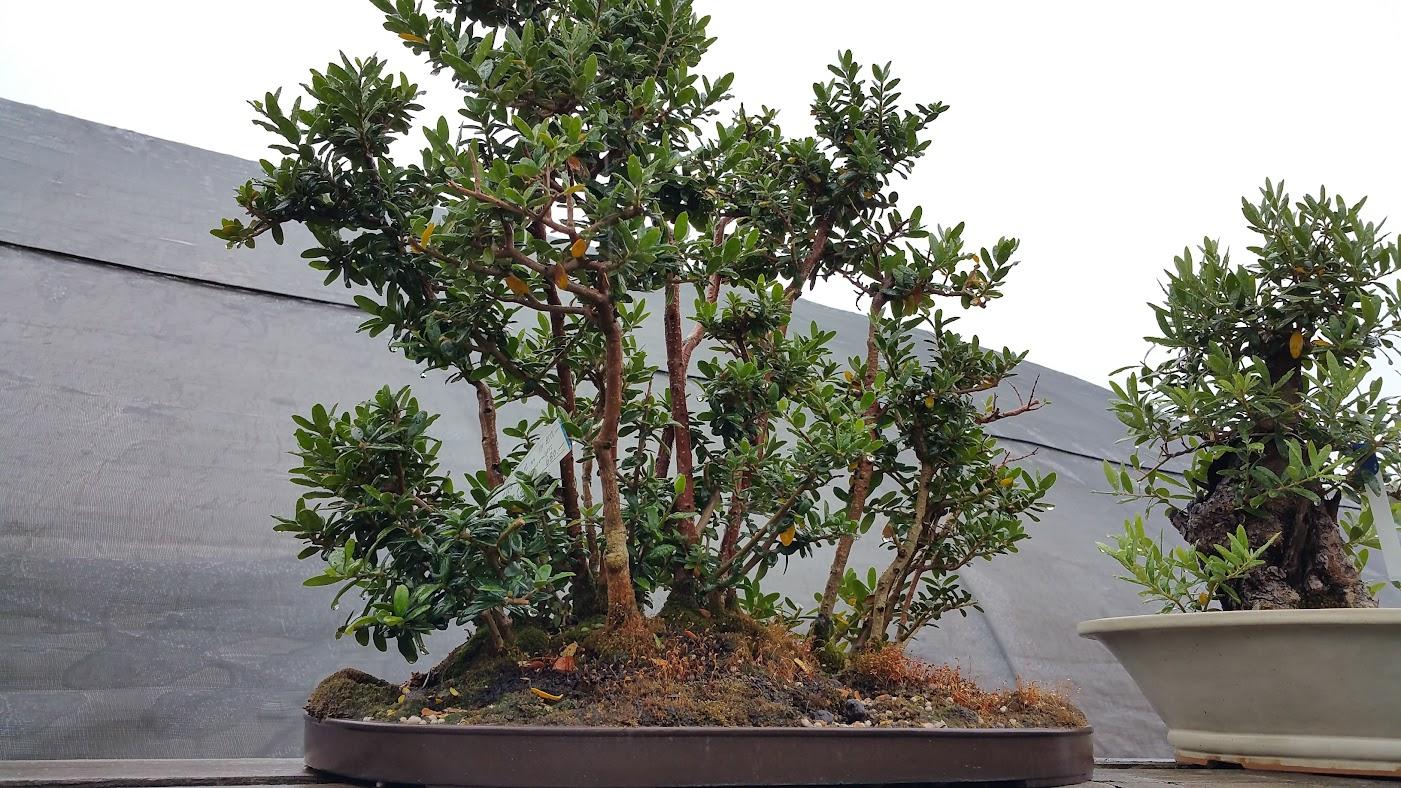 Patrick Dyl New England Bonsai Gardens
