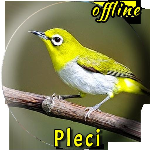 Kicau Burung Pleci Betina التطبيقات على Google Play