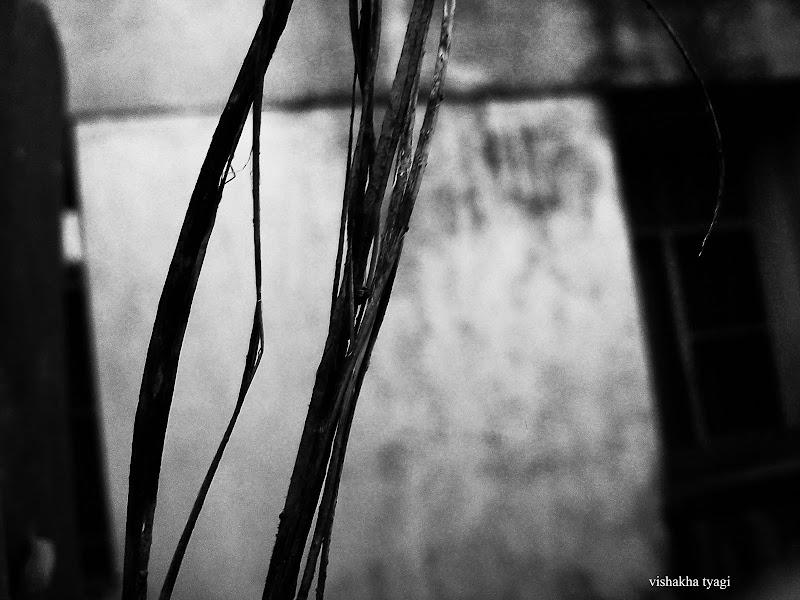 Photo: Haunted