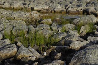 Kuva: vähän löytyy vielä vihreyttä kivien välistä
