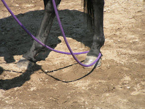 Photo: Magically, the loop will end-up around the inside hind foot!
