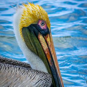 by Matthew Goldsworthy - Animals Birds