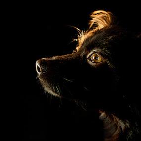 Divine Light by Eduard Moise - Animals - Dogs Portraits