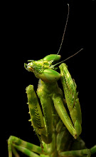 Photo: This mantis was a real poser. Maybe she went to modeling school!
