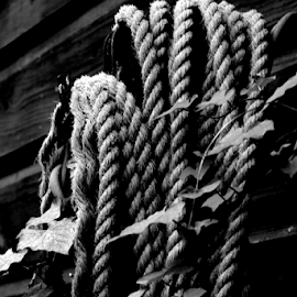 Just Hanging Out by Noel Hankamer - Black & White Objects & Still Life ( antique backdrop background brown cord dark design dirty grey grunge grungy marine natural old retro rope rough rustic texture textured vintage wood wooden monochrome black and white b&w ivy blackandwhite pattern photo border )