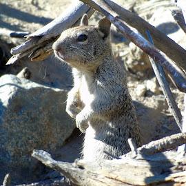 PUT  EM UP by Cynthia Dodd - Novices Only Wildlife ( animals, nature, wildlife, cute, log, squirrel )