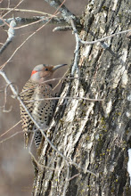 Photo: Woodpecker out the side window.