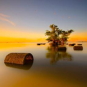 by Wisnu Taranninggrat - Landscapes Waterscapes ( bird, bali, tree, sanur, sunrise, waterspace, landscape,  )