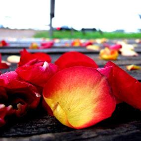 by Oleg Verjovkin - Artistic Objects Other Objects ( rose, petals, summer, latvia, bridge )
