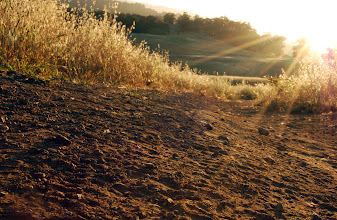 Photo: Requirement 4 (texture), Requirement 2 (improve nature with Photoshop), and Requirement 5 (golden hour): I squatted low on the dirt & gravel path to capture the texture at sunset. The long/low shadows allowed the texture of the dirt (with its shoes prints, gravel and rocks, and small dips in the path) to stand out even more.  At 1/50 and f/29, I attempted to bring as much of the scene into focus -- and did capture a lot of the path in focus. The background of the rolling hills and trees (seemingly smoother textures), which are out of focus, are actually a nice contrast to the bumpier dirt -- in focus in the foreground. I also burned and dodged a few small elements of the dirt to emphasize the texture a bit more.