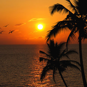 Tropical Beach by Jackie Sleter - Landscapes Sunsets & Sunrises ( warm, sunset, tropical, beach, birds, sun, palms )