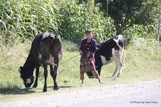 Photo: Day 166 - Between  Samarqand and the Border- Little Girl With Cows
