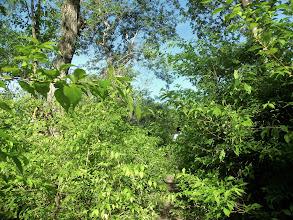 Photo: Honduran Jungle