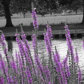 Neon by Arif Burhan - Flowers Flowers in the Wild ( wild, magenta, flowers, riverbank )