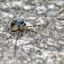 Spider Wasp Vs Two Tailed Spider