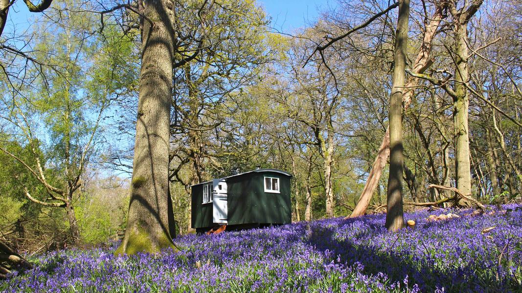 Where to go camping gypsy wagon England