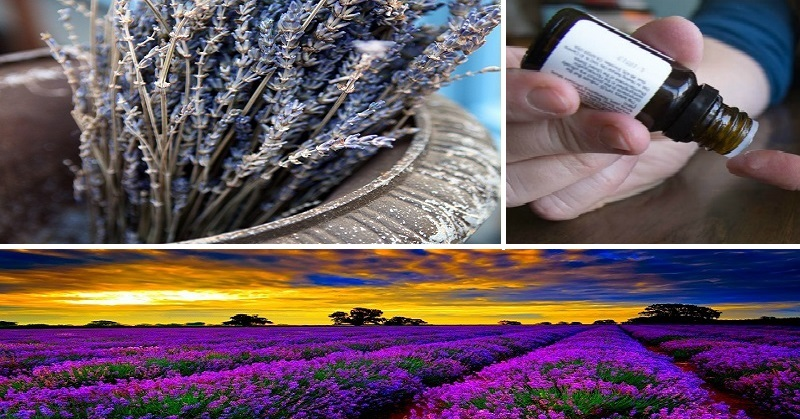 How To Treat Migraines With Lavender For Instant Relief