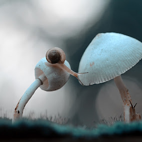 crossing by Girdan Nasution - Nature Up Close Mushrooms & Fungi ( #macro #snail #indonesia #mushroom )