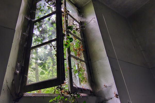 E la natura bussò alla finestra ... di cberetta