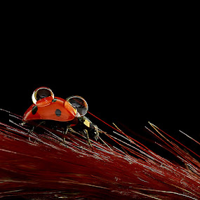 bug by Agus  Sudarmanto - Animals Other