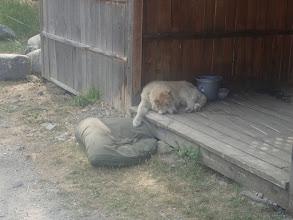 Photo: Lazy days in Montana