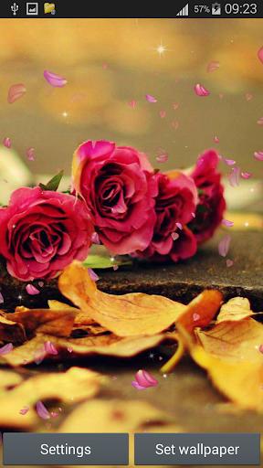 玫瑰動態壁紙