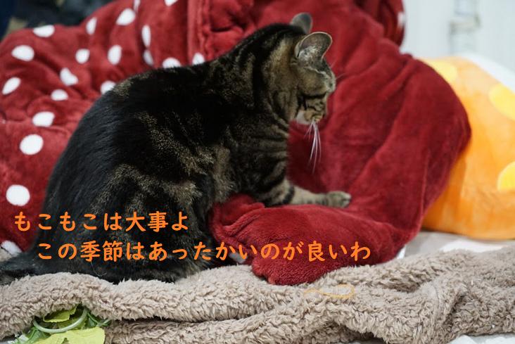 愛猫がフローリングで滑って遊ぶ!対策方法と幼児にもおすすめのマット5選