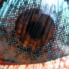 Blue Lens..,,!! by Nirmal Kumar - People Body Parts ( blue, parts, close up, lens, eye )