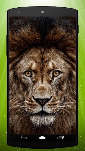 3D Lion Live Wallpaper