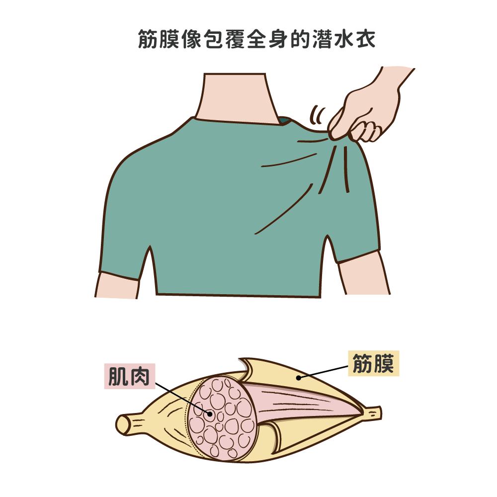 筋膜是什麼?