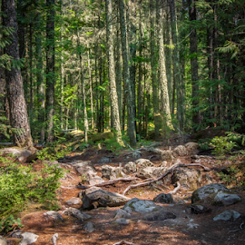 by Darren Sutherland - Landscapes Forests