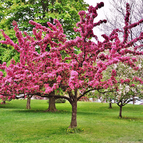 Flowering Tree by Thomas Barr - Nature Up Close Trees & Bushes (  )
